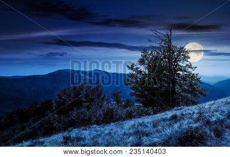 Tree On The Grassy Hillside On At Night In Full Moon Light. Lovely Summer Landscape Of Carpathian Mo