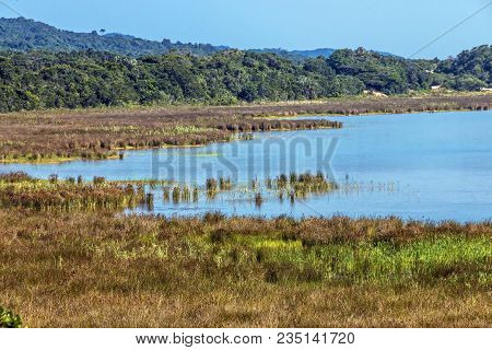 Natural Wetland Vegetation At Lake St Lucia South Africa