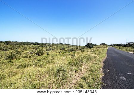 Natural Wetland Vegetation At  Isimangaliso Wetland Park In Zululand