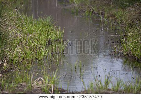 Small, Narrow Water Slough At The Edge Of A Bayou