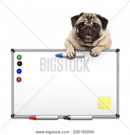 Cute Pug Puppy Dog Hanging With Paws On Blank Marke  White Board With Markers And Magnets, Isolated