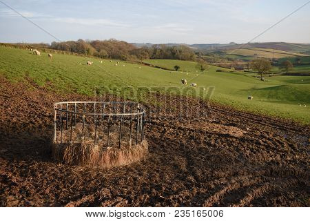 View Across A Field Of Sheep With Their New Born Lambs In Devon, Uk. In The Foreground Is A Metal Ri