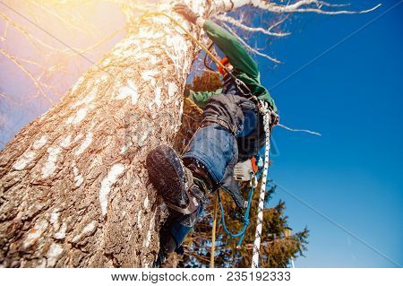 Man Is Working At Height In Outfit. Concept Is To Cut Trees At Altitude.