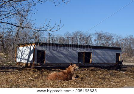 Dogs  shelter for homeless animals.  April 1, 2018 in Kiev,Ukraine