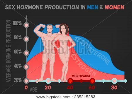 Sex Hormone Production In Men And Women. Average Percentage From The Birth To The Age Of Eighty Year