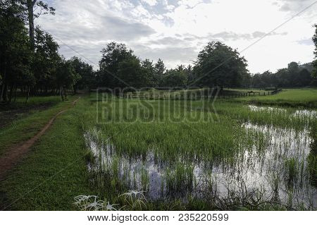 A Forest Path, Next To A Pond With Plants, Not Far From Where There Are Big Trees And Fences. The We