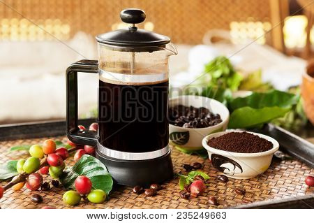 Fresh Coffe In French Press With Roasted Coffee Beans, Fresh And Ripe Coffea Cherries And Leaves Out