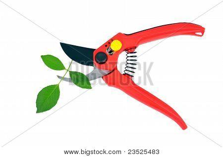 Garden pruner and green leaf