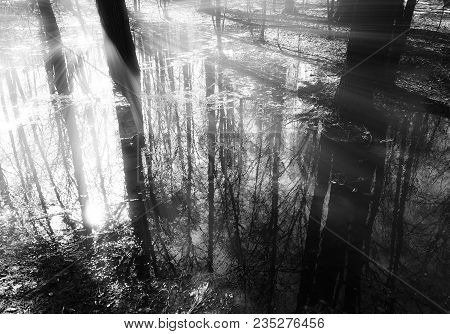 Dramatic Light Rays At Forest River Landscape Background Hd