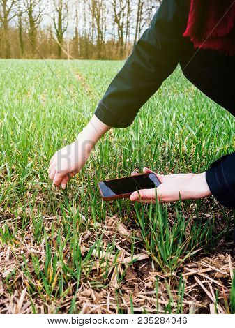 Modern Technology Used In Agriculture -  Agronomist Agriculture Biologist Inspecting The Wheat Plant