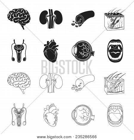 Male System, Heart, Eyeball, Oral Cavity. Organs Set Collection Icons In Black, Outline Style Vector