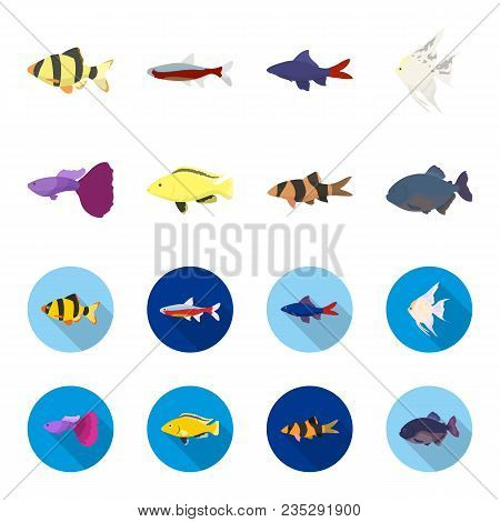 Botia, Clown, Piranha, Cichlid, Hummingbird, Guppy, Fish Set Collection Icons In Cartoon, Flat Style