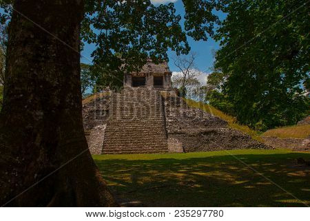Palenque, Chiapas, Mexico: Ancient Mayan Pyramid With Steps Among The Trees In Sunny Weather. Ancien