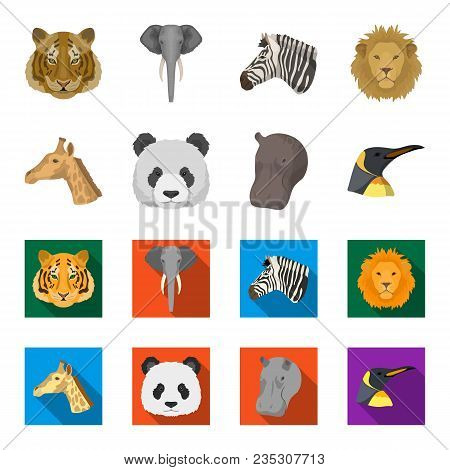 Panda, Giraffe, Hippopotamus, Penguin, Realistic Animals Set Collection Icons In Cartoon, Flat Style