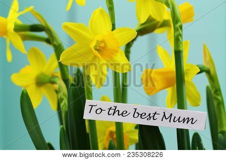 To The Best Mum, Card With Daffodils For Mothers Day