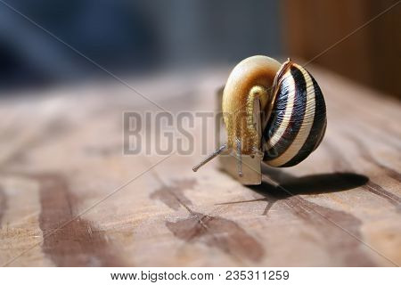 The Snail Is The Sharp Razor Blades On The Wooden Surface