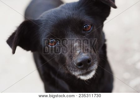 Black Puppy Stray Dog Face With Lonely Eyes