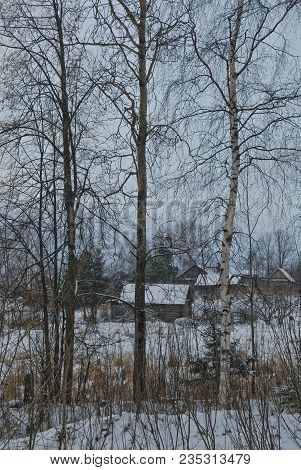 Trees On The Fringe In Winter. In The Background There Is A Village.