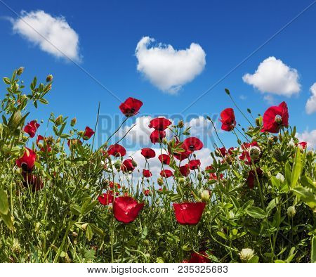 Light cumulus clouds in the blue spring sky. Early spring in Israel. Anemones of the family of buttercups. Concept of ecological and rural tourism poster