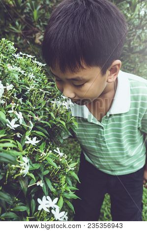 Adorable Asian Boy Admiring For White Blooming Flowers And Nature Around Backyard. Child Having Fun