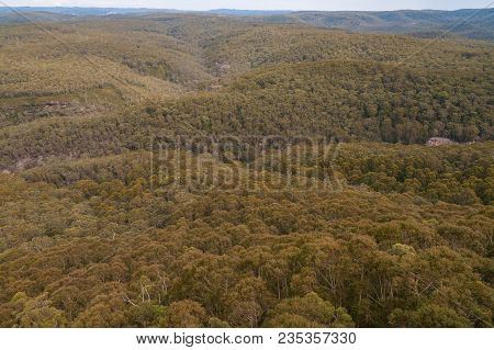 Aerial View Of Vast Eucalyptus Forest. Nature Background