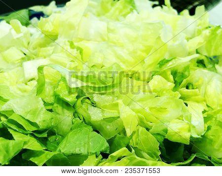 Fresh Lettuce Leaves. Leaf Salad Or Green Salad In The Vegetable Garden. Green Leaves Of Lettuce Lea