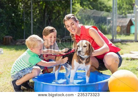 Family washing dog in pool of animal shelter taking care and playing with the animal