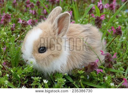 Cute bunny rabbit in colorful meadow beautiful spring scene