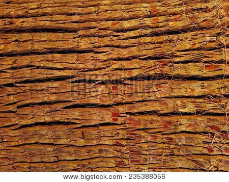 Texture Of Palm Bark Macro. Palm Tree Large Trunk Detailed Structure Background And Texture Of Bark.