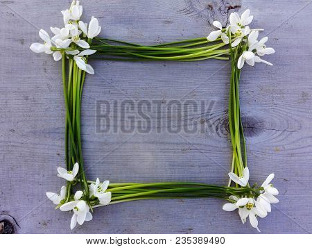 Snowdrop Flowers Frame On Wooden Texture Background. Tender White Snowdrop Flowers Frame On Wooden T