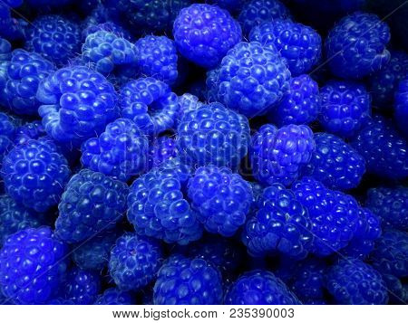 Fresh And Sweet Blue Raspberries Texture Background. Raspberry Fruit Pile Background. Selection Of F