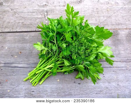 Parsley Bunch On Wooden Table Background. Fresh Parsley On Wooden Background. Organic Italian Parsle