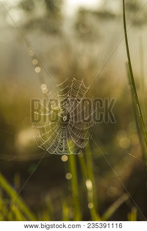 Spider Web In  Backlight And Dew In Jungle At Bardia National Park, Nepal
