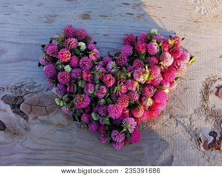 Clover Flower Pink Heart On Knotted Wooden Background. Medicinal Herb Clover Flowers On Heart Shape