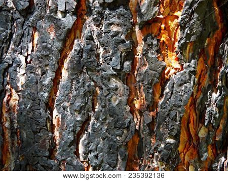 Texture Charred Tree Trunk Black Wood Bark Macro After Fire. Charred Black Wooden Wall. Abstract Cha