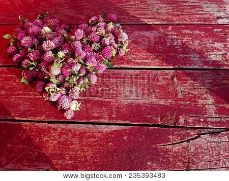 Clover Flower Pink Heart On Red Cracked Wooden Background. Medicinal Herb Clover Flowers On Heart Sh