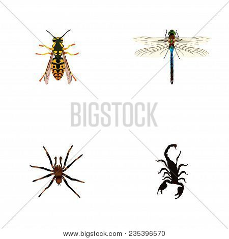 Set Of Bug Realistic Symbols With Sting, Tarantula, Dragonfly And Other Icons For Your Web Mobile Ap