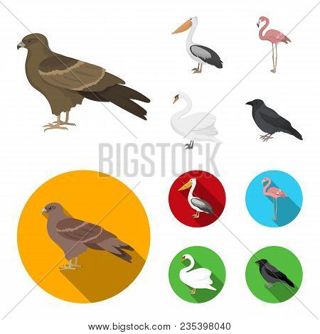 Kite, Pelican, Flamingo, Swan. Birds Set Collection Icons In Cartoon, Flat Style Vector Symbol Stock