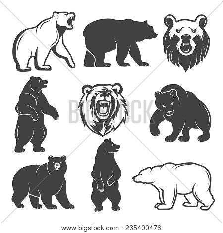 Monochrome Illustrations Of Stylized Bears. Pictures Set For Logos Or Badges Design. Vector Bear Ani