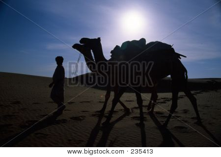 Camels At Night