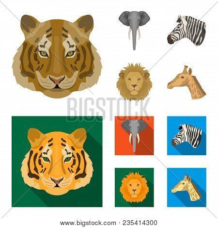 Tiger, Lion, Elephant, Zebra, Realistic Animals Set Collection Icons In Cartoon, Flat Style Vector S