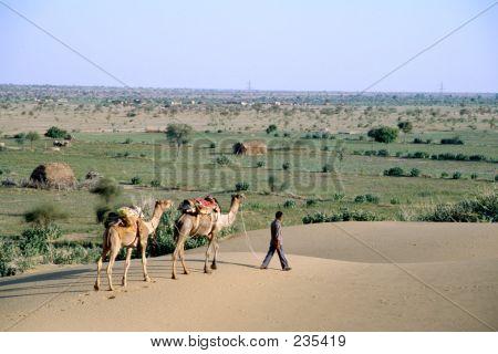 Camel Adn Desert