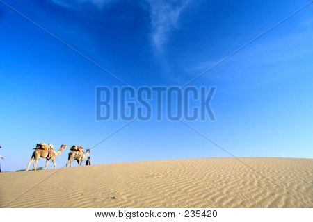 Camels And Sky