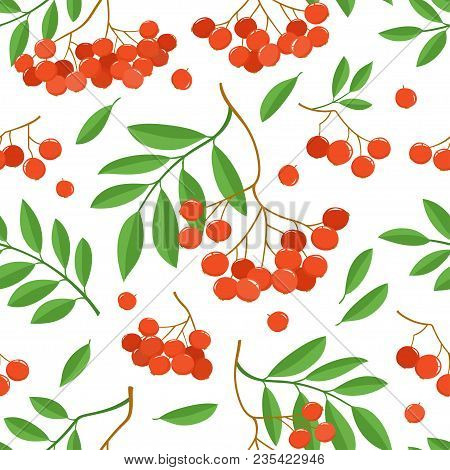 Branch Of Ashberries Isolated On White. Seamless Pattern With Color Mountain Ashes. Bright Berries B