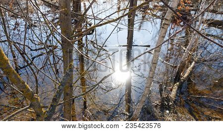 Trees Standing In The Spring Water During A High Water. Reflection Of The Sun In Water