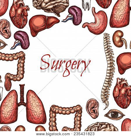 Surgery Poster With Human Organ, Bone And Body Parts Sketch. Lungs, Liver And Heart, Brain, Kidney A
