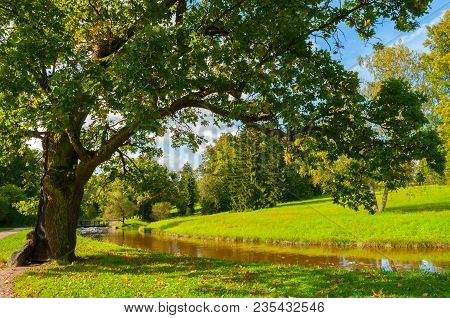 Autumn Landscape Of September Park Autumn Nature. Yellowed Deciduous Autumn Tree At The Bank Of The