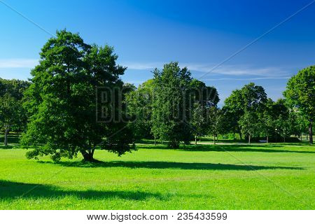 Sunny Meadow With Green Grass And Large Trees In The Park, Deep Blue Sky, Summer Background. Green L