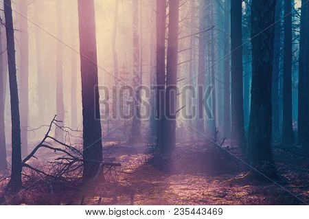 Misty Dark Halloween Forest. Scary Forest Background For Halloween Theme.