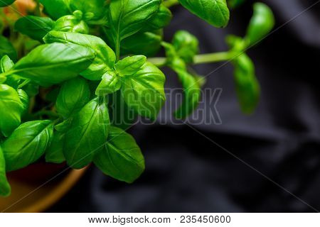 Macro Shot Of Basil Plants Shot At Shallow Depth Of Field